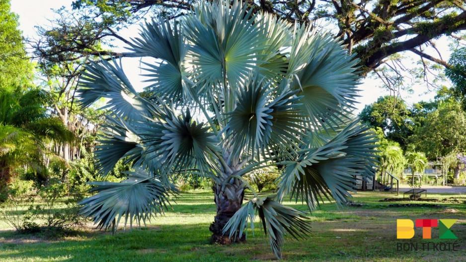 Jardin Botanique de Cayenne